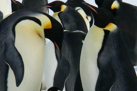 pareja pinguinos enamorados