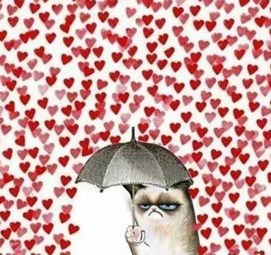 14 febrero meme gato