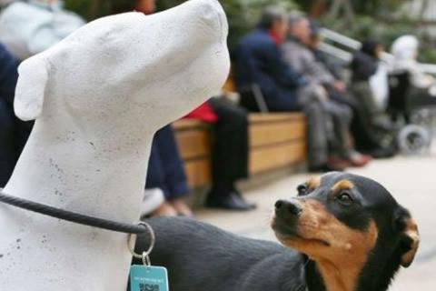 barcelona estatuas perros calle