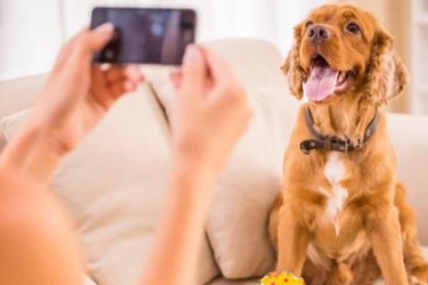 contratar cuidador para perro