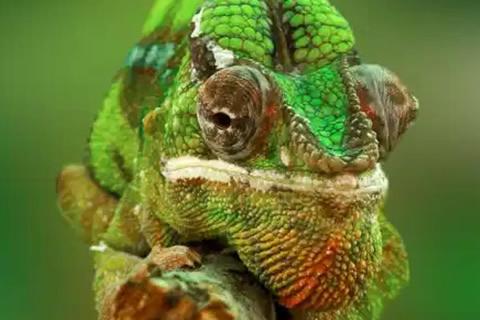 cuidar camaleon