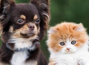 El perro y el gato ¿amor imposible?