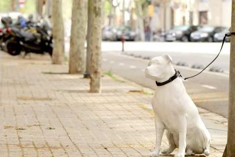 estatuas perros calle