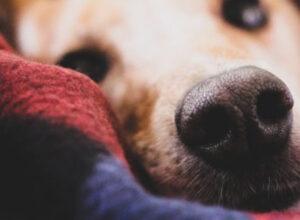 ¿Es cierto que los perros huelen el miedo?
