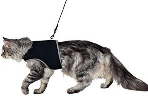 pasear gato calle
