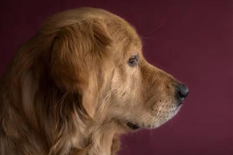 perros huelen miedo