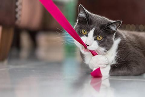 sacar gato pasear