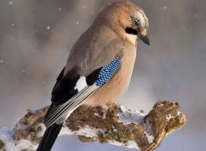 Cinco maravillosas aves que puedes tener en tu casa